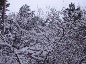 Зимова чарівність