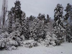 Зимовий парк