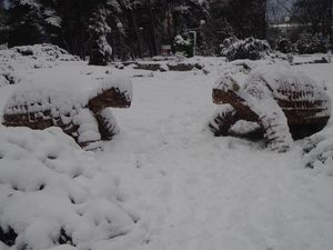 Черепахи взимку