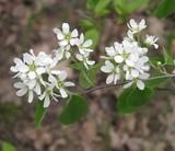 Скоро весна: ботанічна екскурсія в околицях ДВРЗ