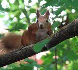 Сезон тиші у природному середовищі