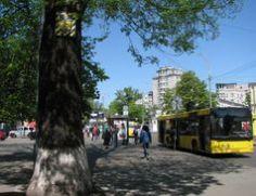 Ясени Тотлебена біля станції метро Арсенальна в Києві