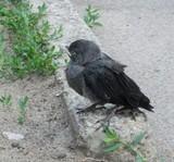 Июнь - месяц птенцов
