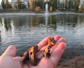 Чилим на Русановском канале