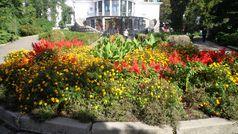 Ботанічний сад імені академіка Олександра Фоміна