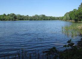 Озеро Лісове