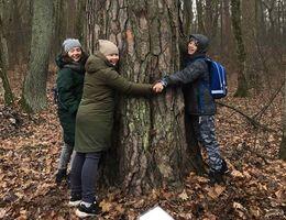 Вікові дерева Броварського лісництва