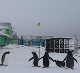 Тепла зима в Антарктиді: раптове повернення пінгвінів