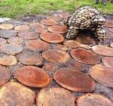 На Березняках побудували екологічну доріжку до черепах