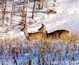 Полохливих тварин підгодовують у Дарницькому лісництві