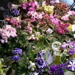 У зимову стужу кольорові квіти