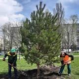 На Алеї діаспор сьогодні висадили шість дерев