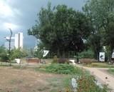 Комунальні служби району ліквідують наслідки зливи зі шквальним вітром