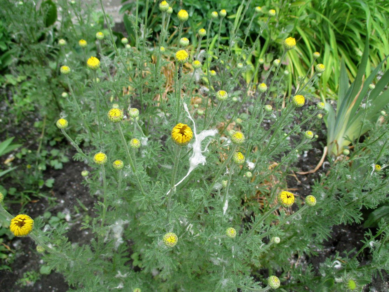 15 комнатных растений, которые очистят от. - УКРОП. org 70