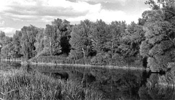 Река Дарница