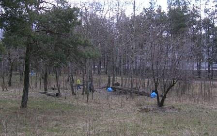 В лісі синьо від кульків