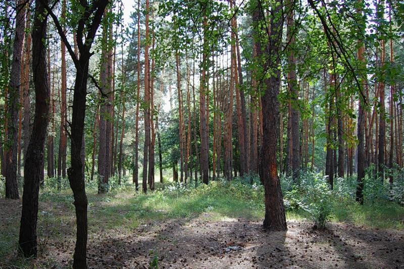 Ліс на ДВРЗ